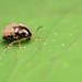 mini bus - flea beetle covered in hitch-hikers #2 by Lord V