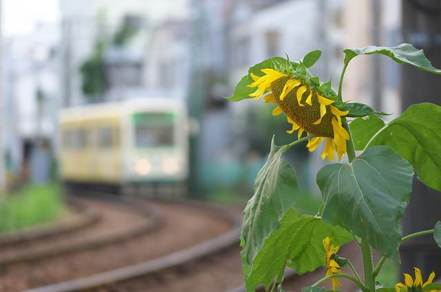 Tokyo Train Story 都電荒川線 2014年9月23日