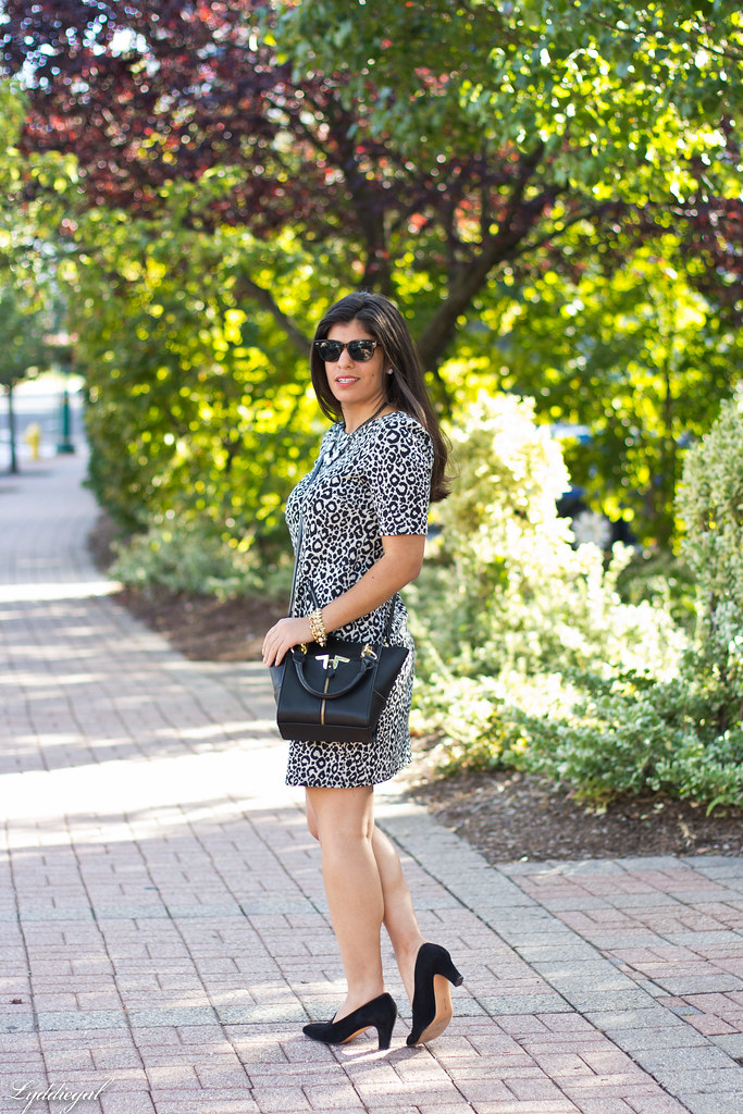 leopard dress, black bag, ferragamo pumps-1.jpg