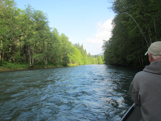 Willamette river fishing report the caddis fly oregon for Oregon free fishing