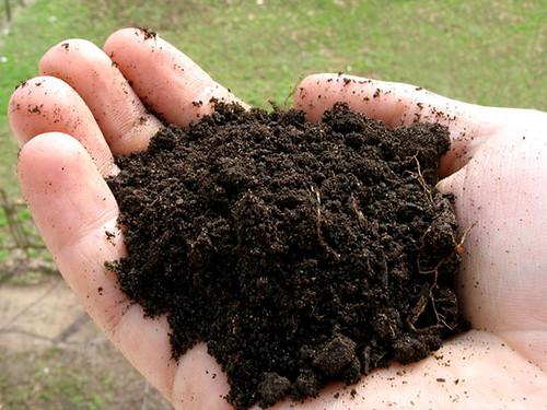 Гумус почвы и его создатели