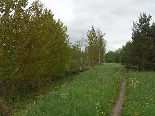 Niittynäkymä, Pohjois-Tapiola Espoo 31.5.2014