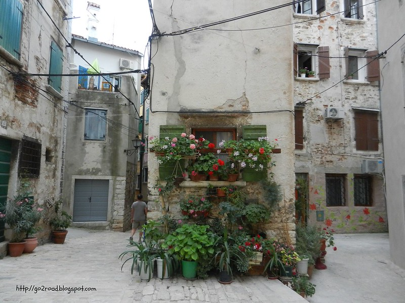 Растения в окнах
