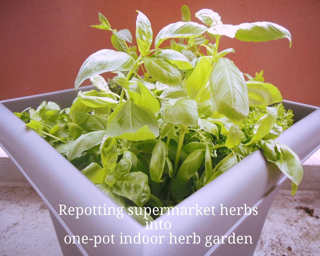 How to repot supermarket herbs into one-pot indoor herb garden