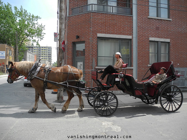 Photo of the Day : Calèche - horse-drawn carriage