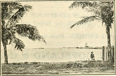 """Image from page 172 of """"Stewart's hand book of the Pacific islands; a reliable guide to all the inhabited islands of the Pacific Ocean, for traders, tourists and settlers"""" (1919)"""