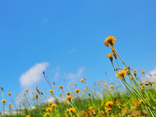 北海道 中富良野 Lavender Park