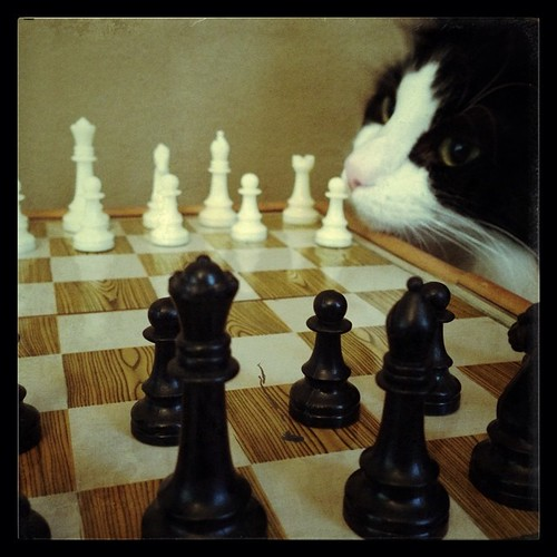 #fmsphotoaday July 8 - I've never... played chess. And neither has Oscar, apparently, though he was most intrigued by the setup and nearly made off with one of the pieces!