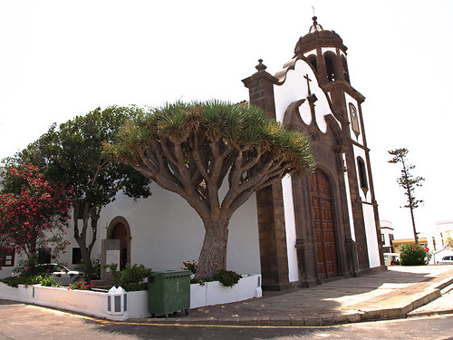 Drago Tree, Arico casco, Tenerife