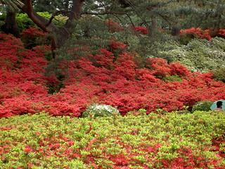 小室山公園|Komuroyama Park