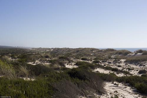 Juste derrière la dune, la végétation sauvage du bord de mer.