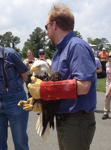 Virginia Wildlife Center staff prepare to release the eagle at Belle Isle State Park