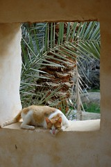 EGYPT:  Siwa and the Sahara
