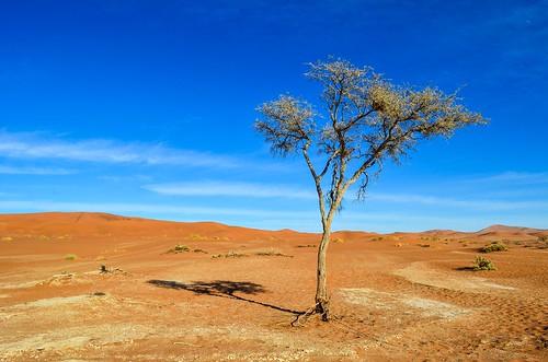 Dry salt pans in Sossusvlei, Namibia
