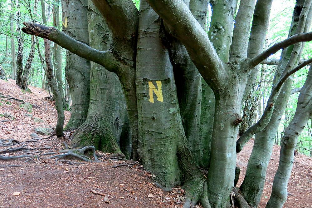 Nimis
