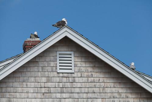 blue usa mer house beach birds angle newhampshire rye pointofview maison oiseaux pointdevue 484 485 cedre goelan sergek