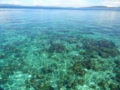 coral reef(0.0), lagoon(0.0), coral reef fish(0.0), swimming(0.0), marine biology(0.0), underwater(0.0), coral(1.0), sea(1.0), bay(1.0), natural environment(1.0), shoal(1.0), reef(1.0),