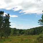 Deerness View Woodland 2014-08-30