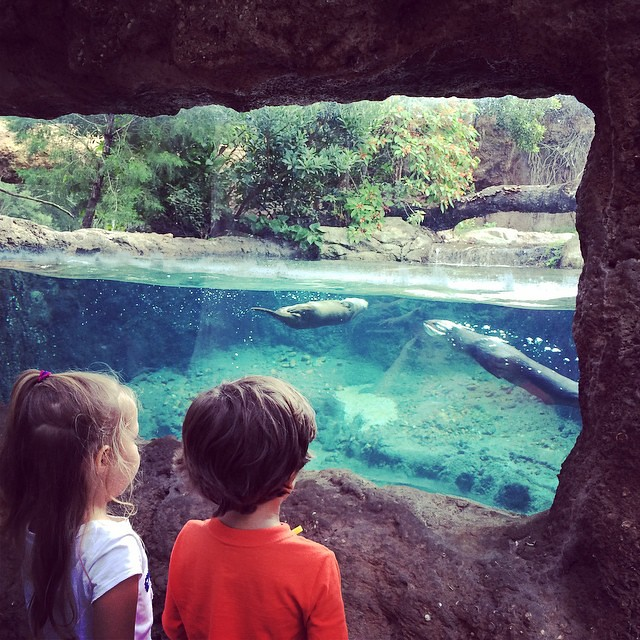 Fun at the #Sanford #Zoo :) #otters #playdate