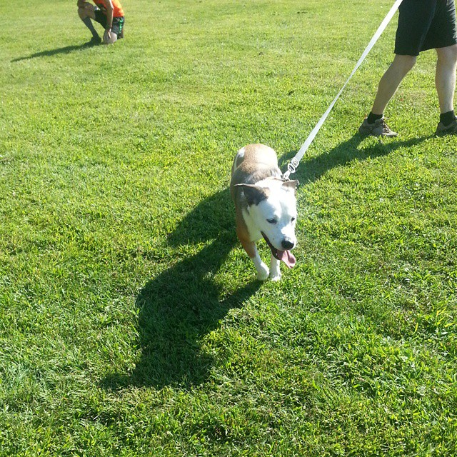 Daisy crossing the finish line (cue we are the champions) #latergram #dogsofinstagram