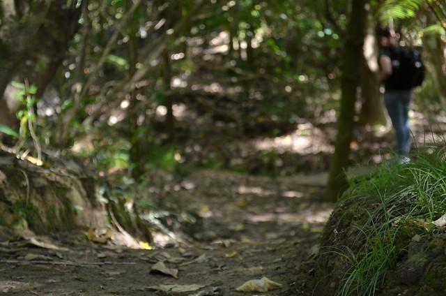 Hiking | Waiheke Island