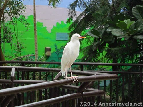 A bird in the bird house, Cape May Zoo, New Jersey
