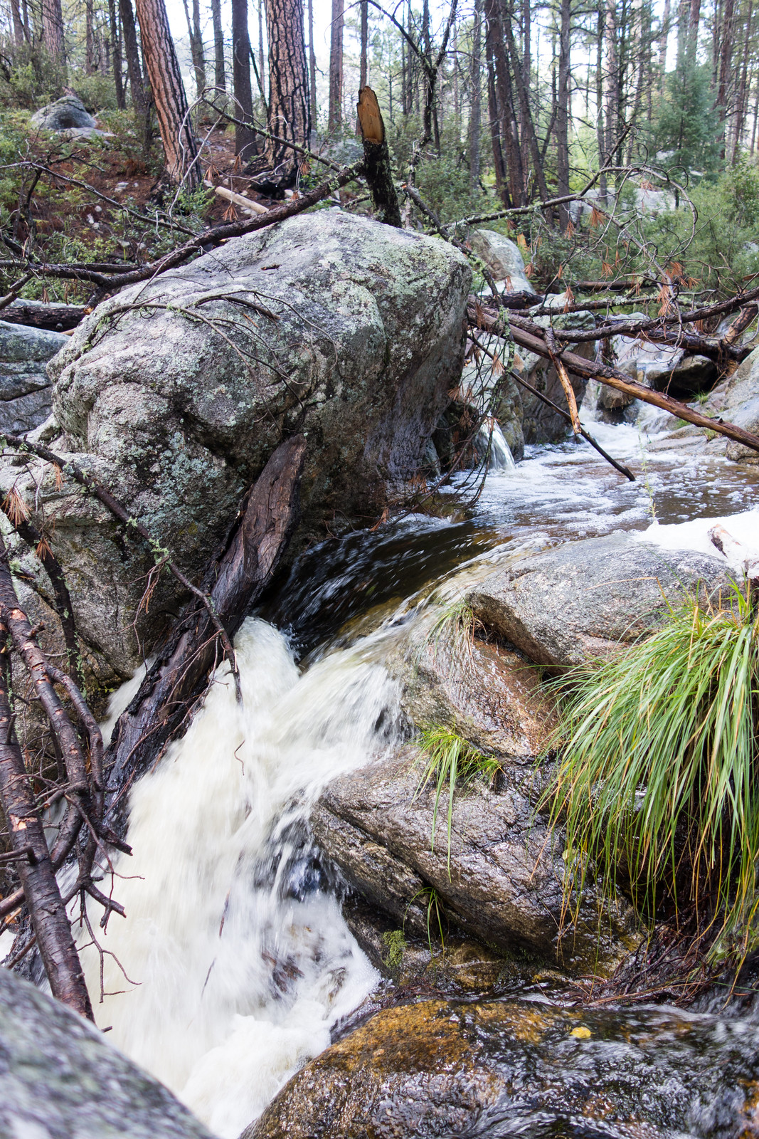 1409 Rushing Water Near the Wilderness of Rock Trail