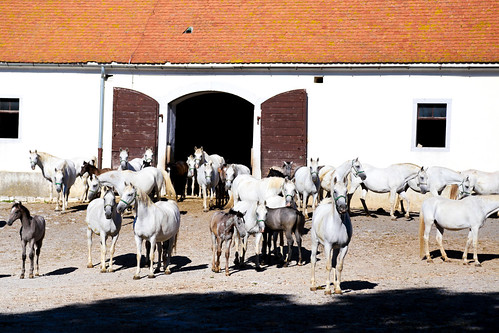 Lipica Stud Farm, Slovenia