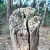 Stump.