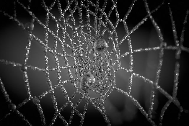 diamond's web