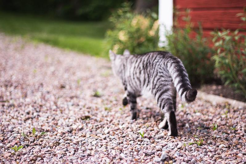 katten8
