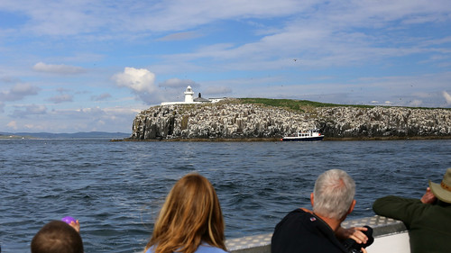 All aboard for the ten o'clock sailing to the Farne Islands!