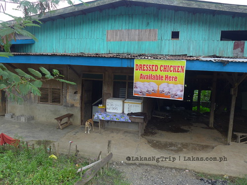 Dressed Chicken seller in Brgy. Tawas. DDD Habitat Inc. in Lorega, Kitaotao, Bukidnon