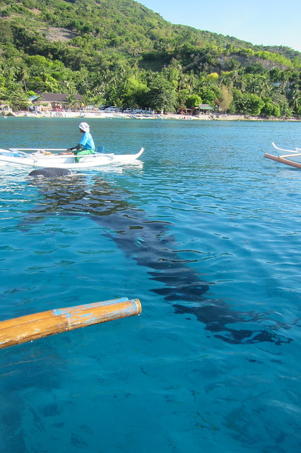 From above water. See size of the boat and the shark size in comparison!