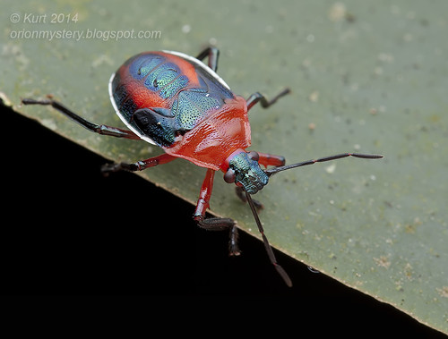 Jewel Bug IMG_1494 copy