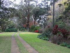 Boyce Gardens Toowoomba in June. Red azalea flowering.