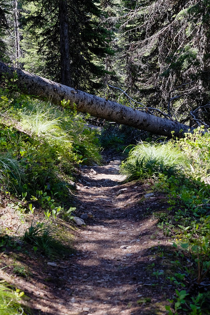 Trail to Mt. Brown