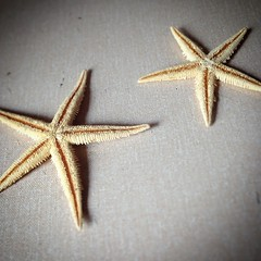 here are the two starfish i found wrapped in a hobbycraft bag.