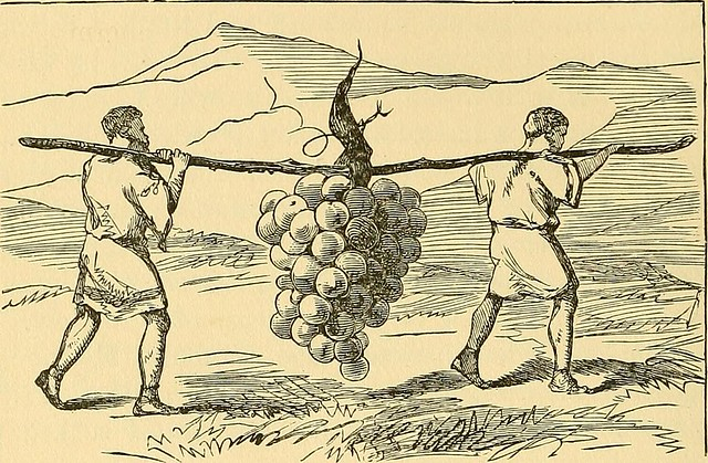 "Image from page 465 of ""The innocents abroad;"" (1897) from Flickr via Wylio"