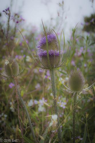 190/365 Soft Purples