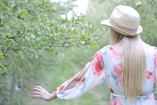 Apfelbaumallee Eugli(10)