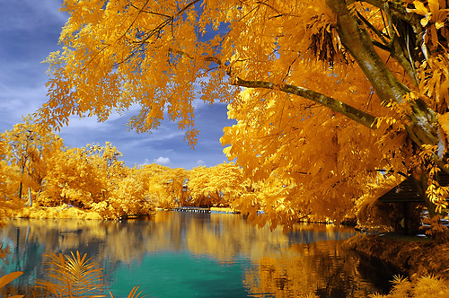 trees shadow lake reflection nature water colors landscape gold pond infrared nationalzoo