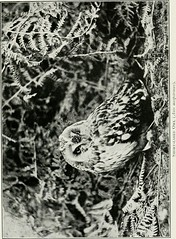 "Image from page 226 of ""Pictures of bird life : on woodland meadow, mountain and marsh"" (1903)"