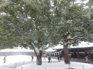Meiji Shrine Snow Scene