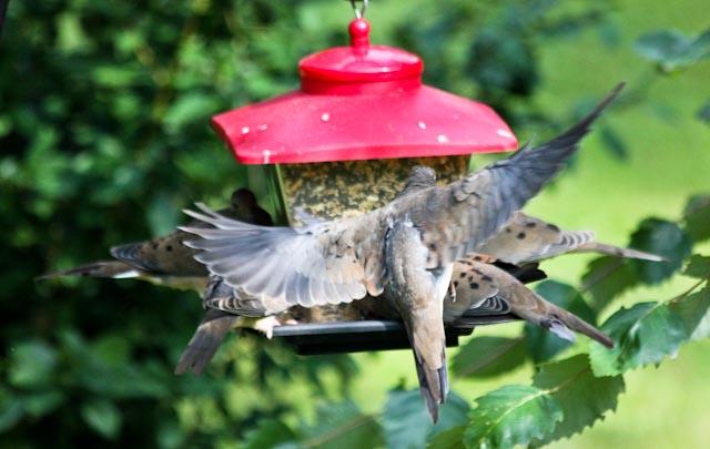 4 on feeder+1