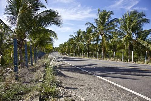 Coqueiral da Lagoa do Roteiro, Alagoas