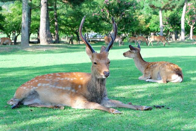 Deer04