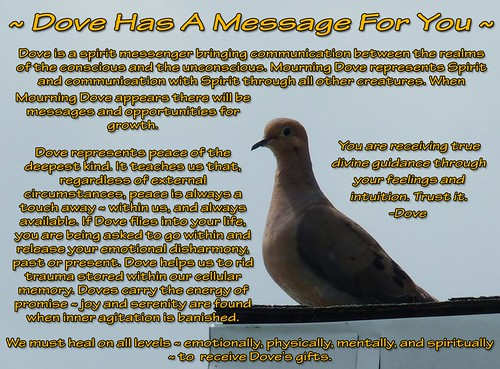 ~ Dove Has A Message For You ~