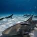 Shark Action by OneoceanOnebreath