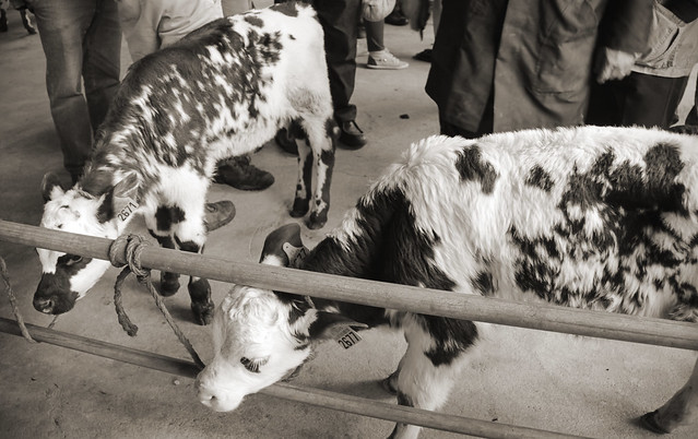 Briouze - Monday market